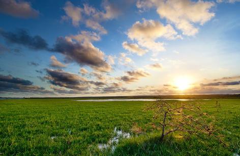 Flood-plain at sunset