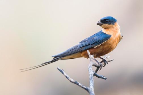 Hluhluwe birding