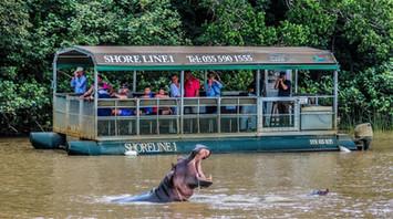 St-Lucia hippo safari