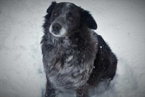 Max - ug, snow