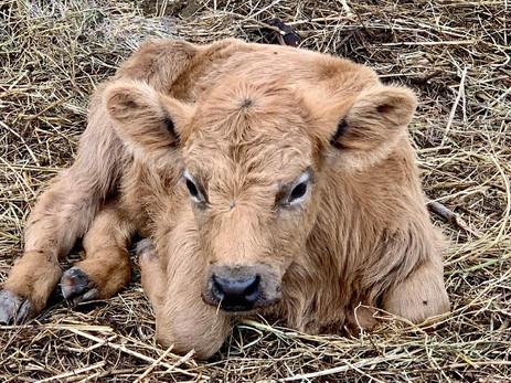 Thor - 1 week old