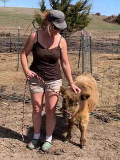 Thor at 11 months - HighPark Bull Calf