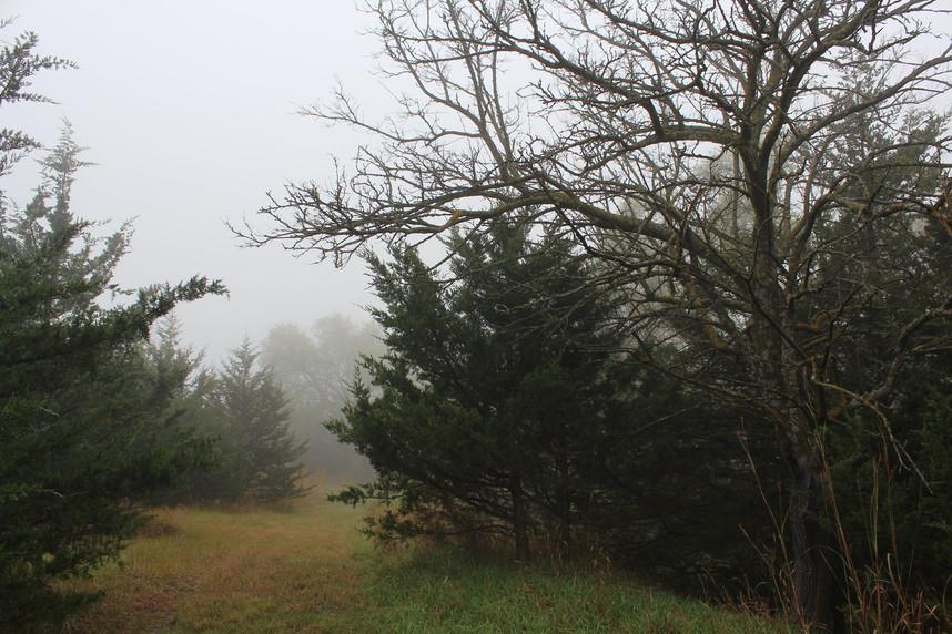 Foggy Path.jpg