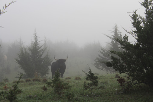 Lucy in the fog