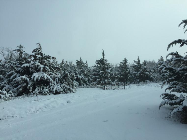 Photo Dec 04, 10 19 49 AM.jpg
