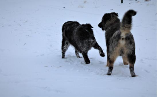 Bandit & Max playing
