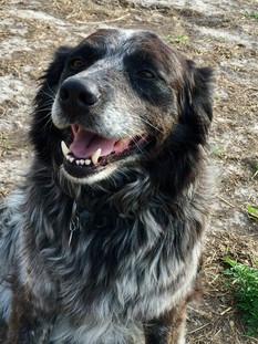 Maxie the faithful companion