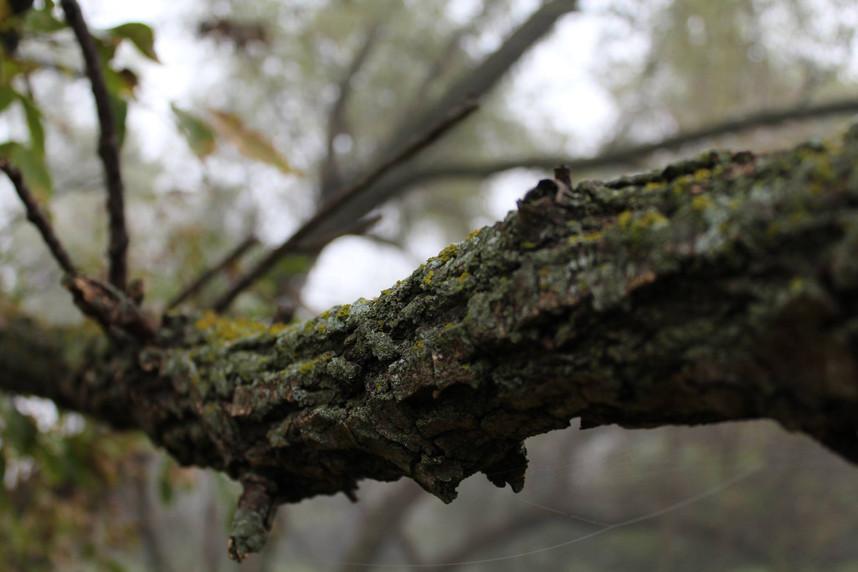 Moss on Tree Branch.jpg