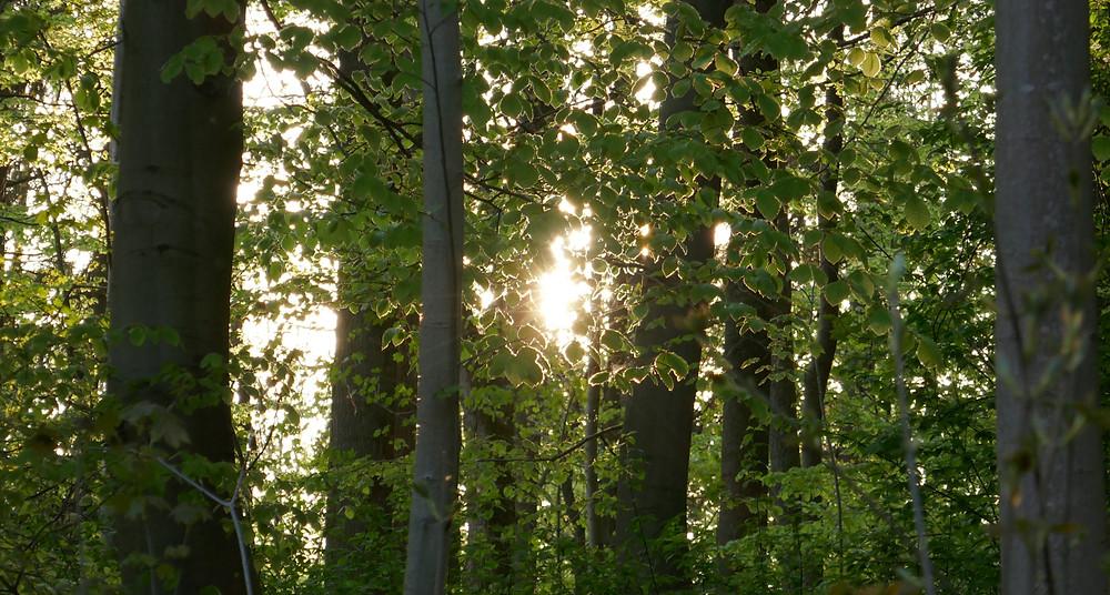 Wald in Deutschland (Foto: Dennis Gutjahr)