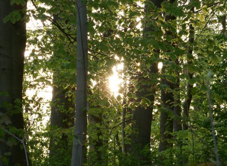 10 Gründe für die Wiederbewaldung