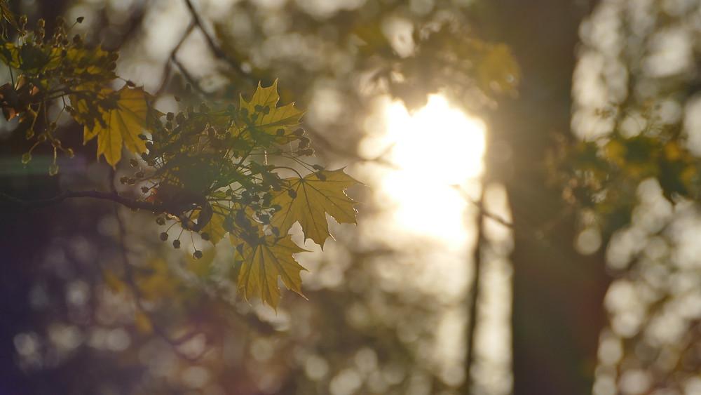 Bäume als Nahrungsspender (Foto: Dennis Gutjahr)