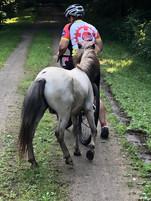 Stray pony