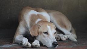 Starromania unterstützt SDS bei Tierarztkosten