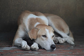 Communicate with Departed pets