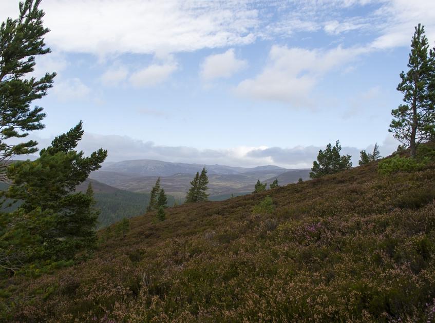LochNess Cairngorm (13)