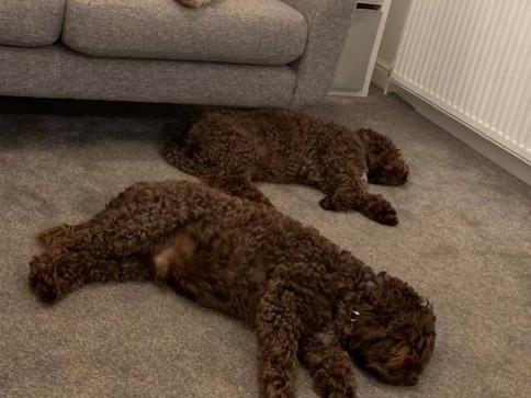 Tierd dogs