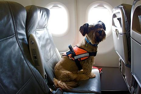 certificado para viajar con animales en avion