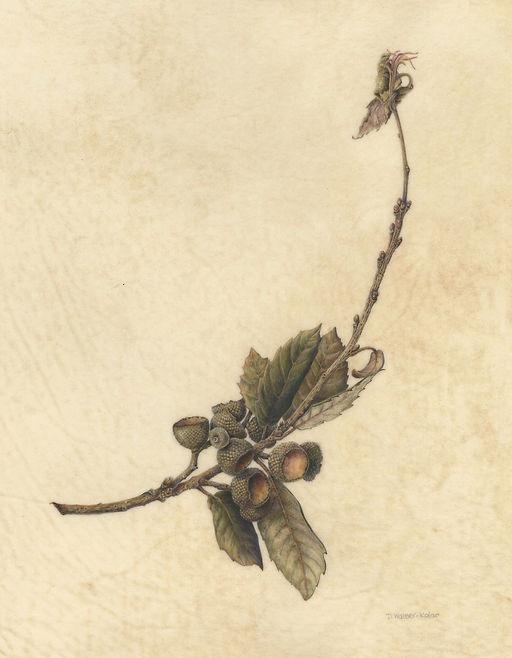 Walser-Kolar Oak Branch.jpg