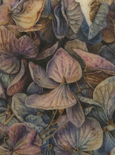 Hydrangea-Final-400-dpi-cropped-area.jpg