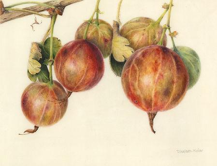 Walser-Kolar - Gooseberries.jpg