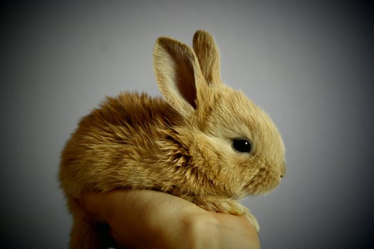 Why did I go vegan? (Insert cute fluffy bunny pic to suck you all in...)