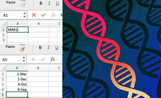 Scientists have renamed 27 human genes because Excel processed them incorrectly
