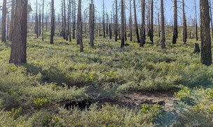 Identifying where to reforest after a wildfire