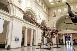 Argentine titanosaur may be oldest yet: study