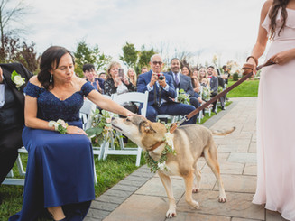 Bring your fur baby to your wedding in NJ.