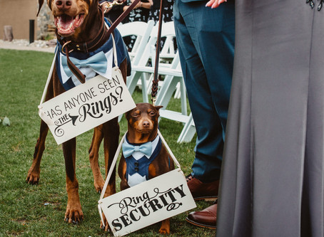 Fun ways to Include your dog in your Wedding🐶