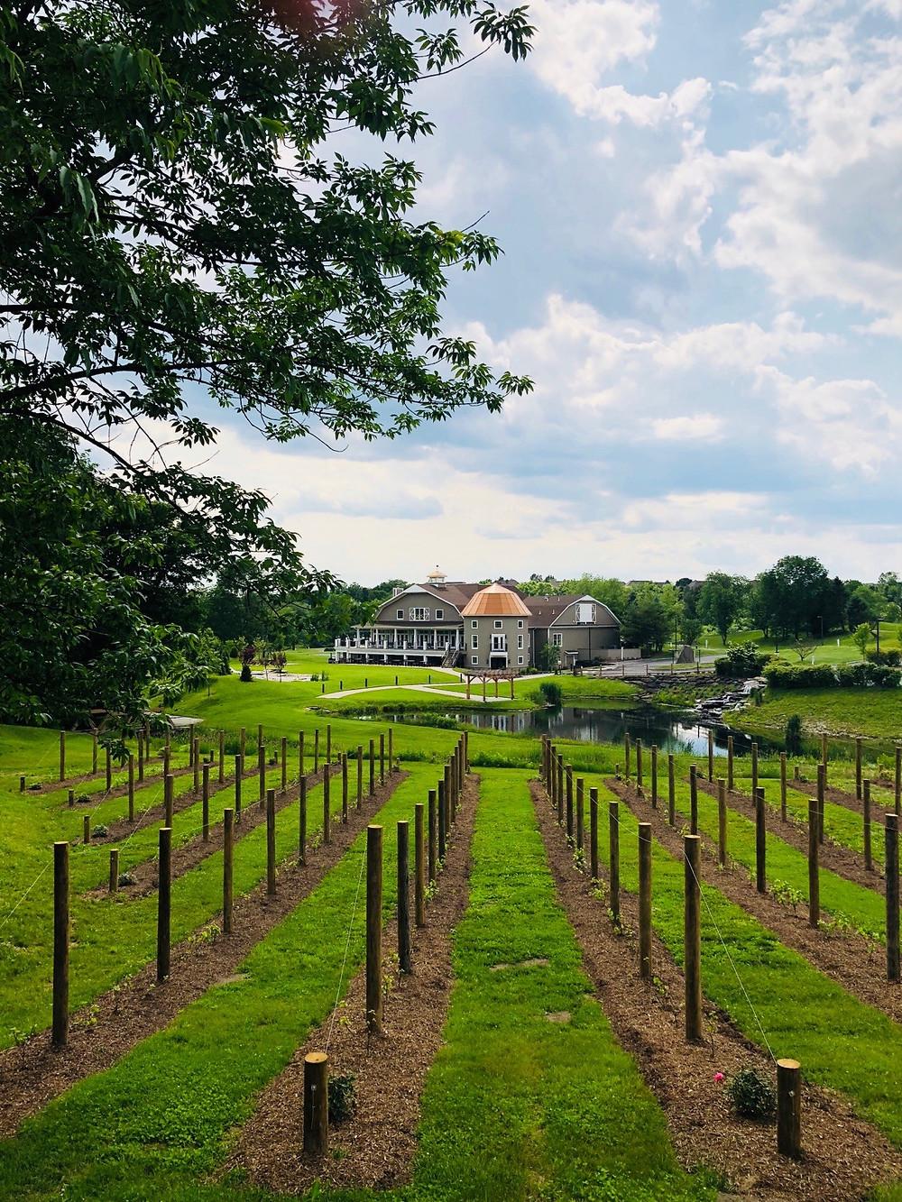 The vineyard at Bear Brook Valley