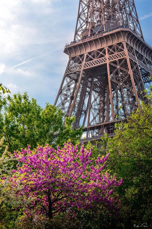 Paris - Vista da Torre I
