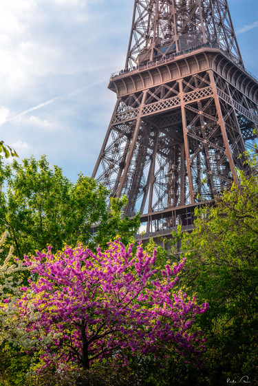 Paris - Vista da Torre I.JPG