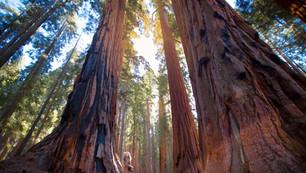 sequoia senete instagram finalfinal 4x3 (1 of 1).jpg