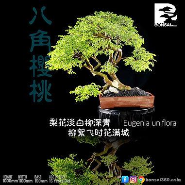 Eugenia Uniflora 006