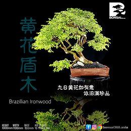 Brazillian Ironwood  004