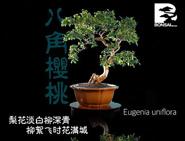 Eugenia Uniflora 001