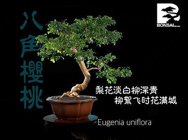 Eugenia Uniflora 004