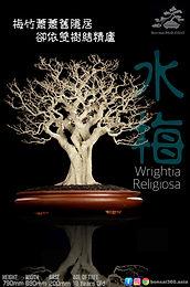 Wrightia Religiosa 003
