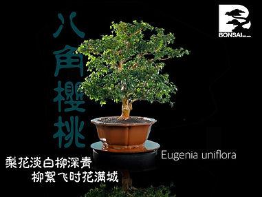 Eugenia Uniflora 002