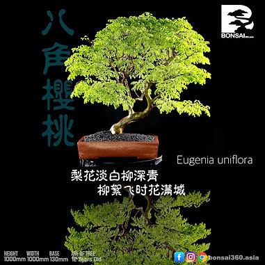 Eugenia Uniflora 005