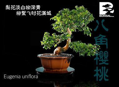 Eugenia Uniflora 003