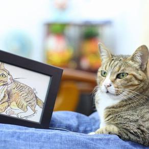 Doodle your cat