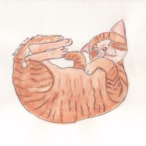 100 Poses of Cats