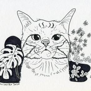 Cat in botanical garden