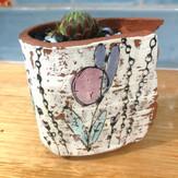 Baby Succulent