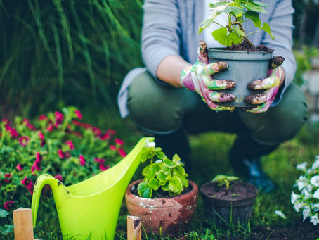 Come sistemare il giardino di casa: perché farsi aiutare da un professionista.