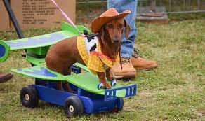 Dog Days of Cuchara 2021 is ONNNN!!!