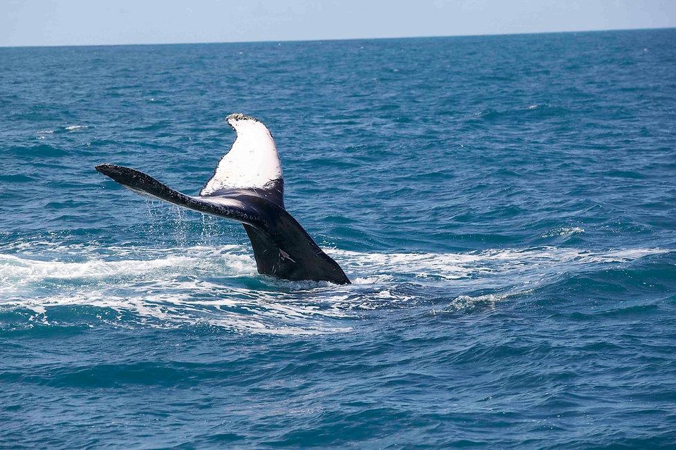 abrolhos.baleia jubarte (10).jpeg