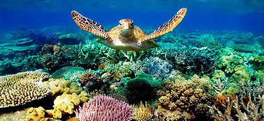 abrolhos.tartarugas (2).jpg